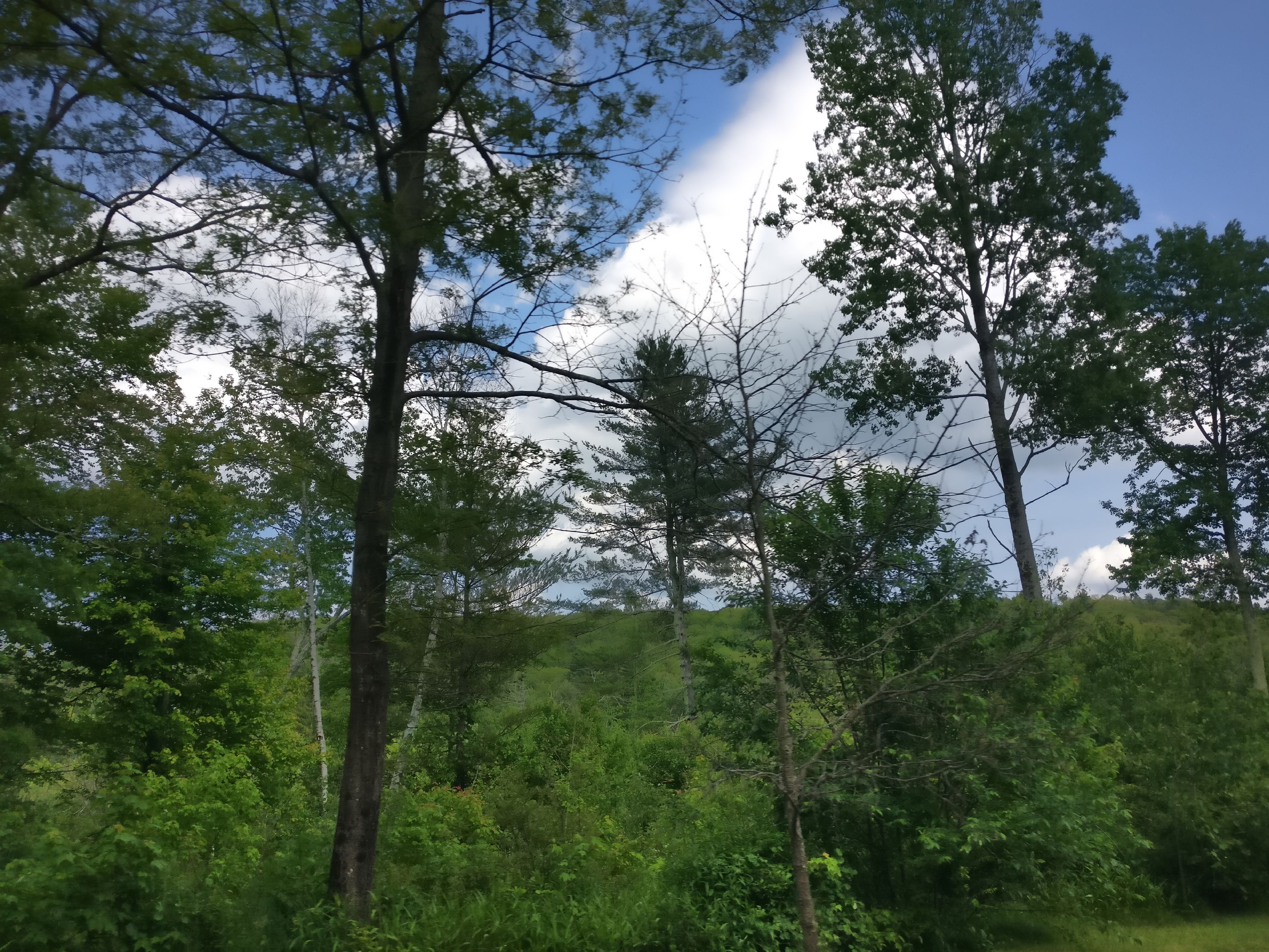 tree, nature, forest, growth, low angle view, day, no people, beauty in nature, outdoors, tranquility, plant, landscape, branch, sky