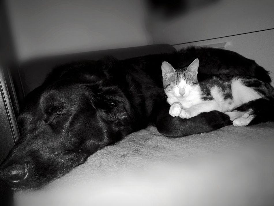 Dog &cat Domestic Animals Pets No People SnuggleBuddies Cute