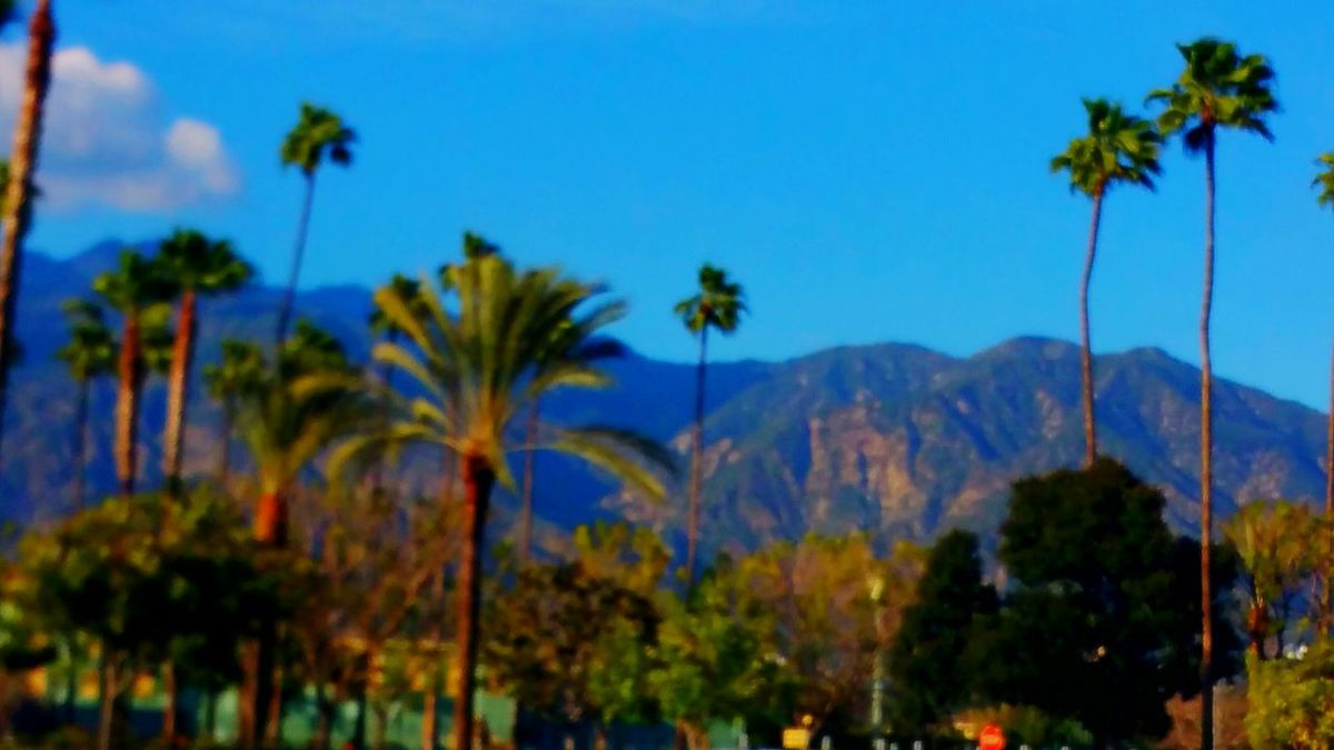 Mountains Palm Trees View Street View California Sky Sky_collection Sky And Palm Tree Atmospheric Mood Relaxing Natural Beauty Enjoying Life Distance Walking Around Enjoying The View Enjoy Life