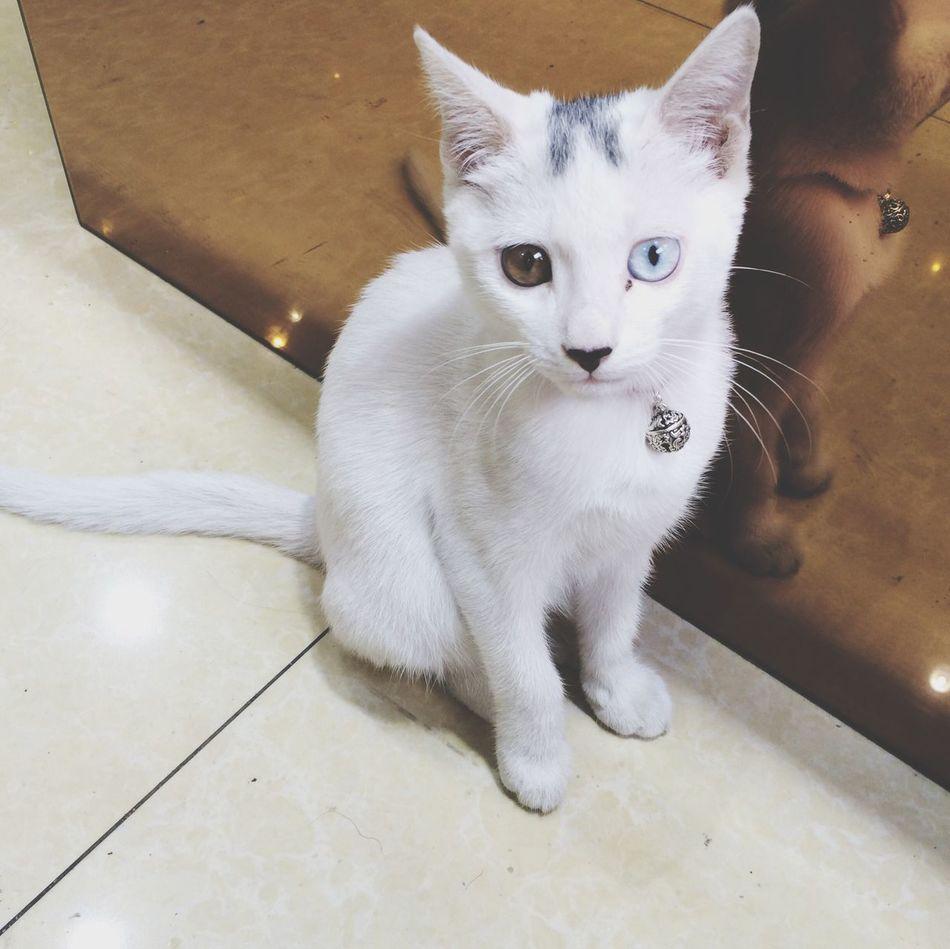 Beautiful stock photos of kitty, Animal Themes, Domestic Animals, Domestic Cat, Flooring