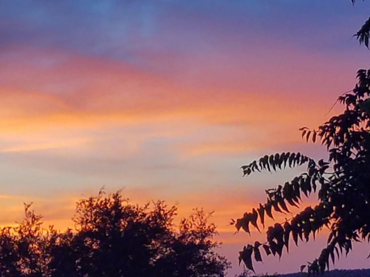 sunset, nature, silhouette, sky, tree, beauty in nature, growth, no people, cloud - sky, tranquility, scenics, outdoors