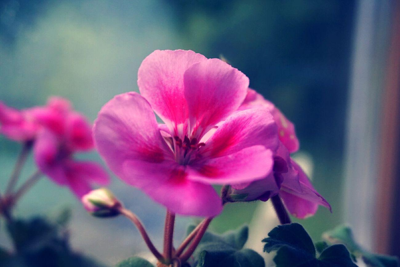 Flowers, Nature And Beauty Macro Beauty Pink Flowersandmacro Powys Wales