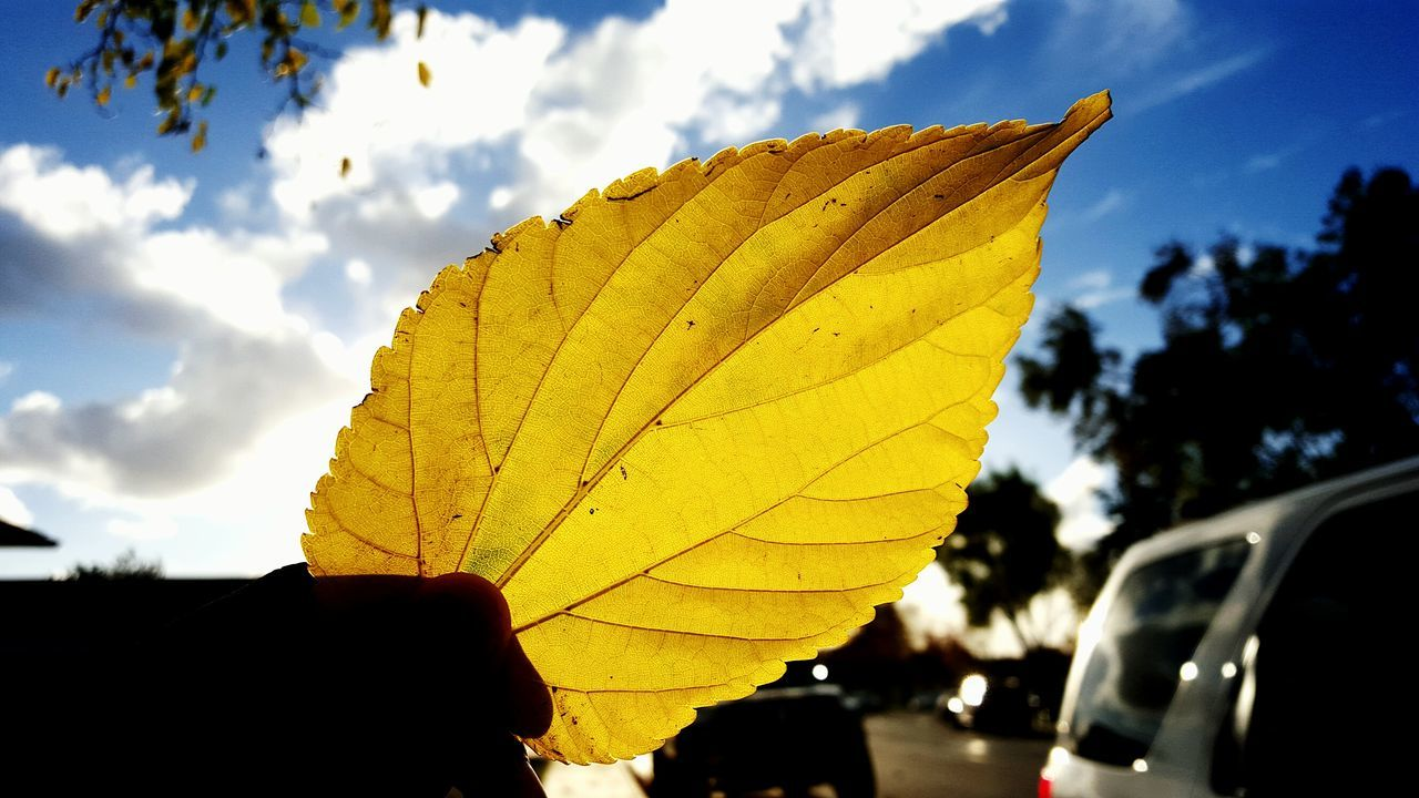 It is early on this Thanksgiving morning, and the sky is partly cloudy and the cold air sits all around me. The streets are packed with cars and the sun starts to rise. Leafs are covering yards and have even gone far out into the streets on and around cars. I grab one of them off the sidewalk and hold it to the sunlight, every detail coming out. The suns rays travel across the sky, a warm yellow hue mixed with the blue. EyeEm Nature Lover Happy Thanksgiving!! Light And Shadow Sunrise Partly Cloudy Nature_collection Leafporn Details Beautiful Day Goodmorning EyeEm  Sky And Clouds Eyeemphotography Lovely Street California