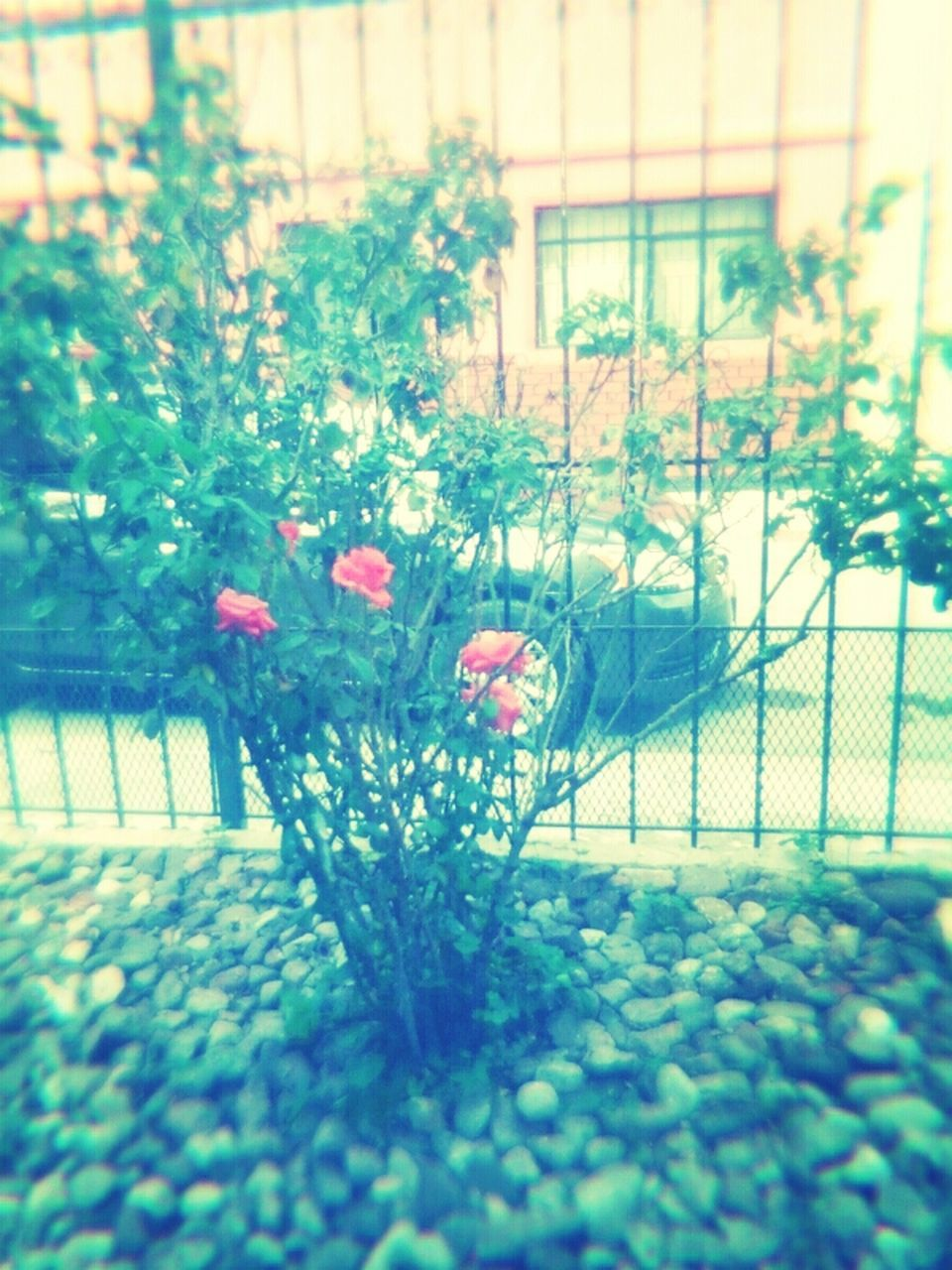 growth, flower, plant, nature, no people, outdoors, day