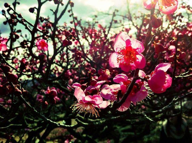 咲きはじめって感じかなー