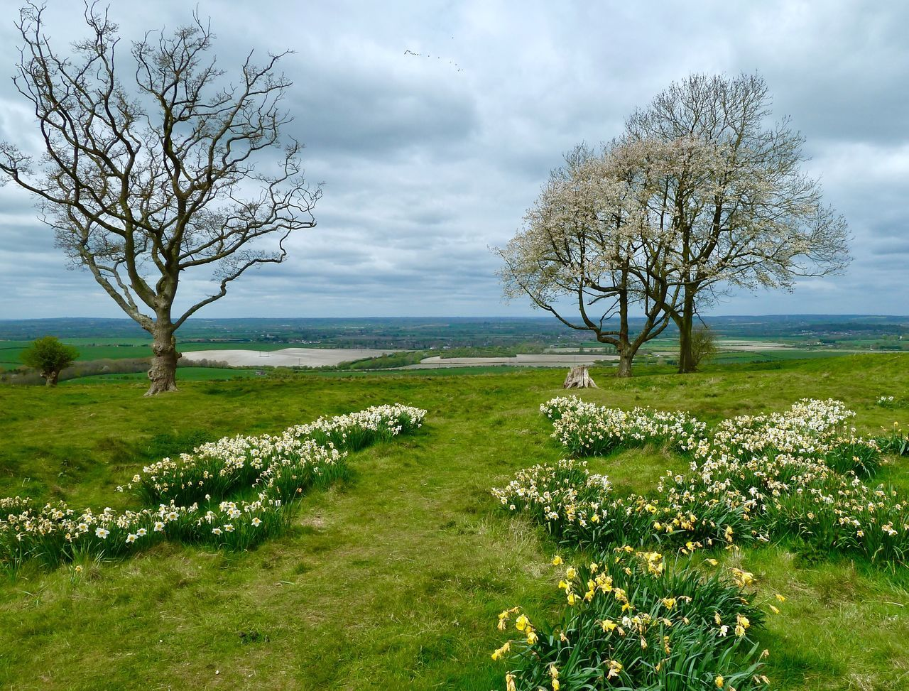 Whipsnade Zoo Springtime Grass Nature Tranquil Scene Beauty In Nature Tranquility Tree Landscape Sky Cloud - Sky Scenics Green Color Non-urban Scene Day Field No People Sea Growth Outdoors Water Horizon Over Water