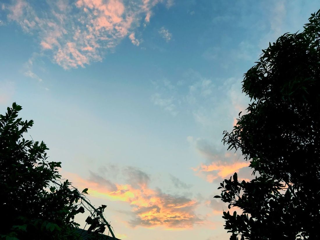 Tree Sky Low Angle View Nature Beauty In Nature Cloud - Sky No People Silhouette Growth Outdoors Scenics Day Branch