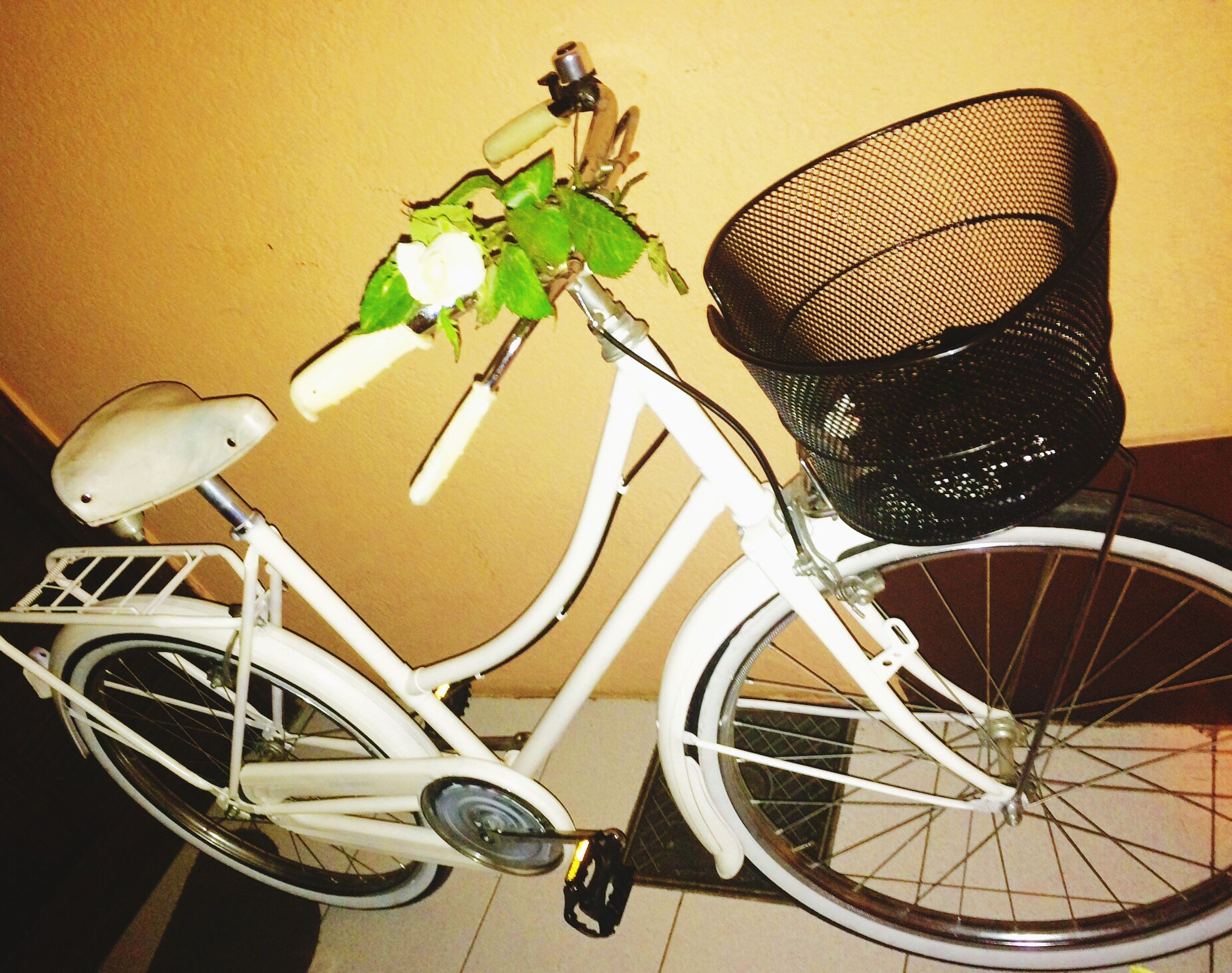Bru_birthday White_bicycle White Flower 😚