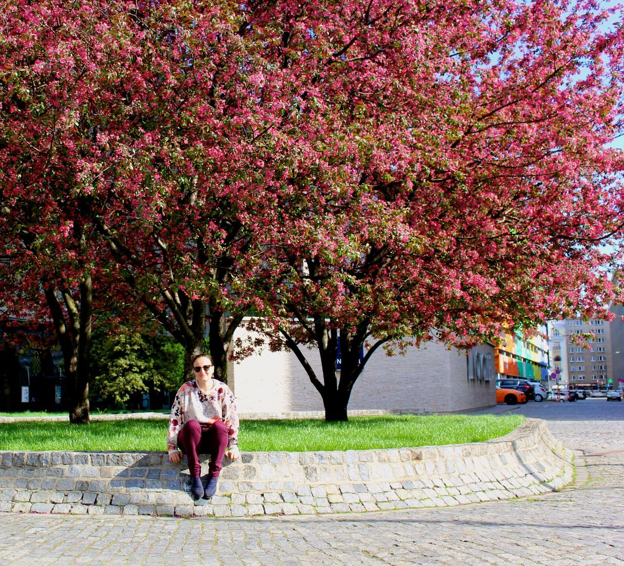 Full Length Of Woman Sitting Below Flowering Trees By Street