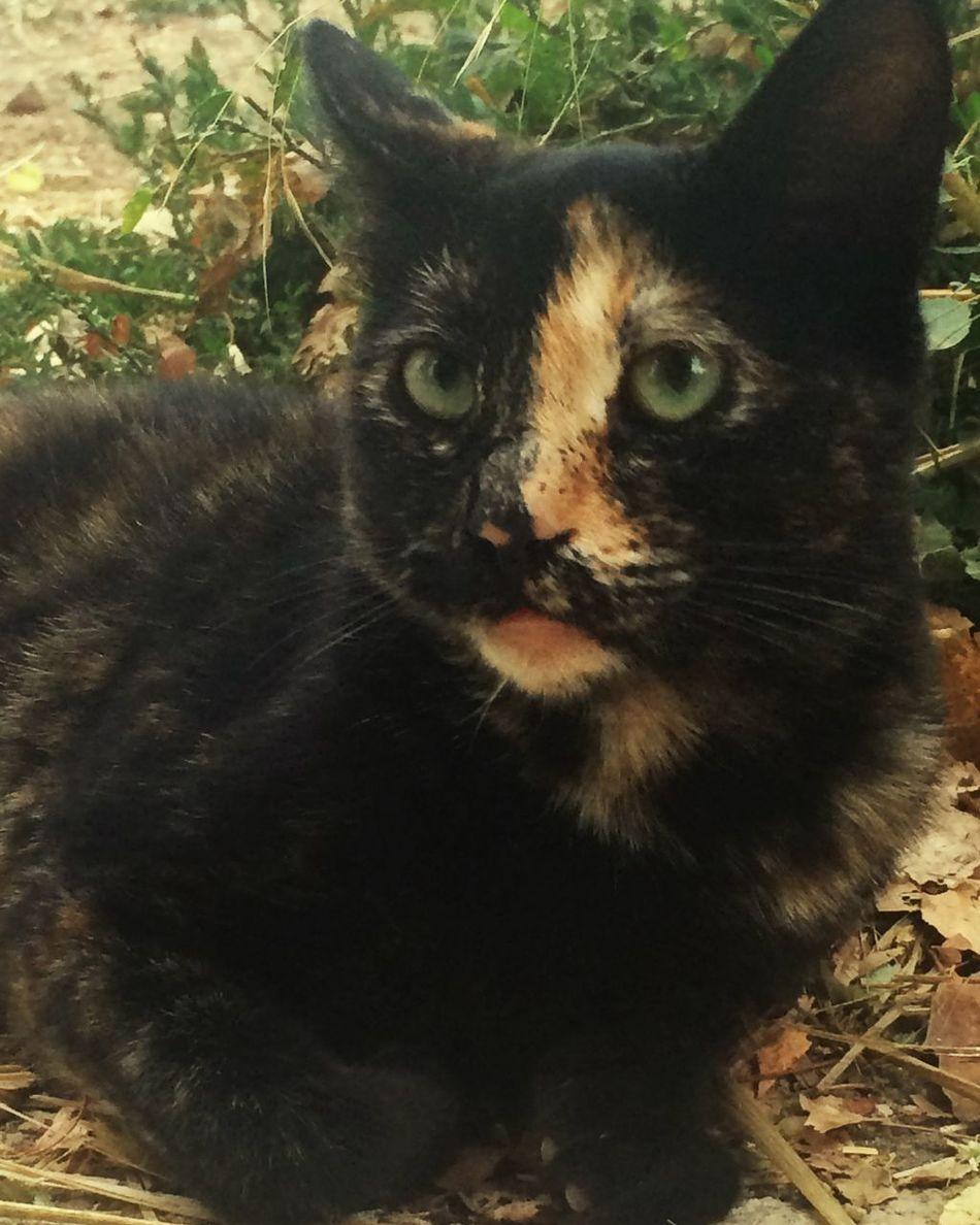 Guşumm😍 Black Cat♡ Nature_collection EyeEm Gallery Turkey Türkiye Hello World