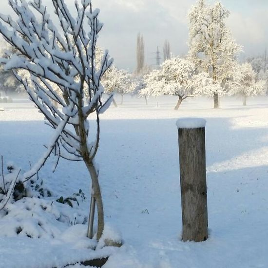 A typical austrian winter Snow Winter Cold Temperature Outdoors No People Nature Landscape Ice Day Beauty In Nature White Color EyeEmNewHere The Week On EyeEm