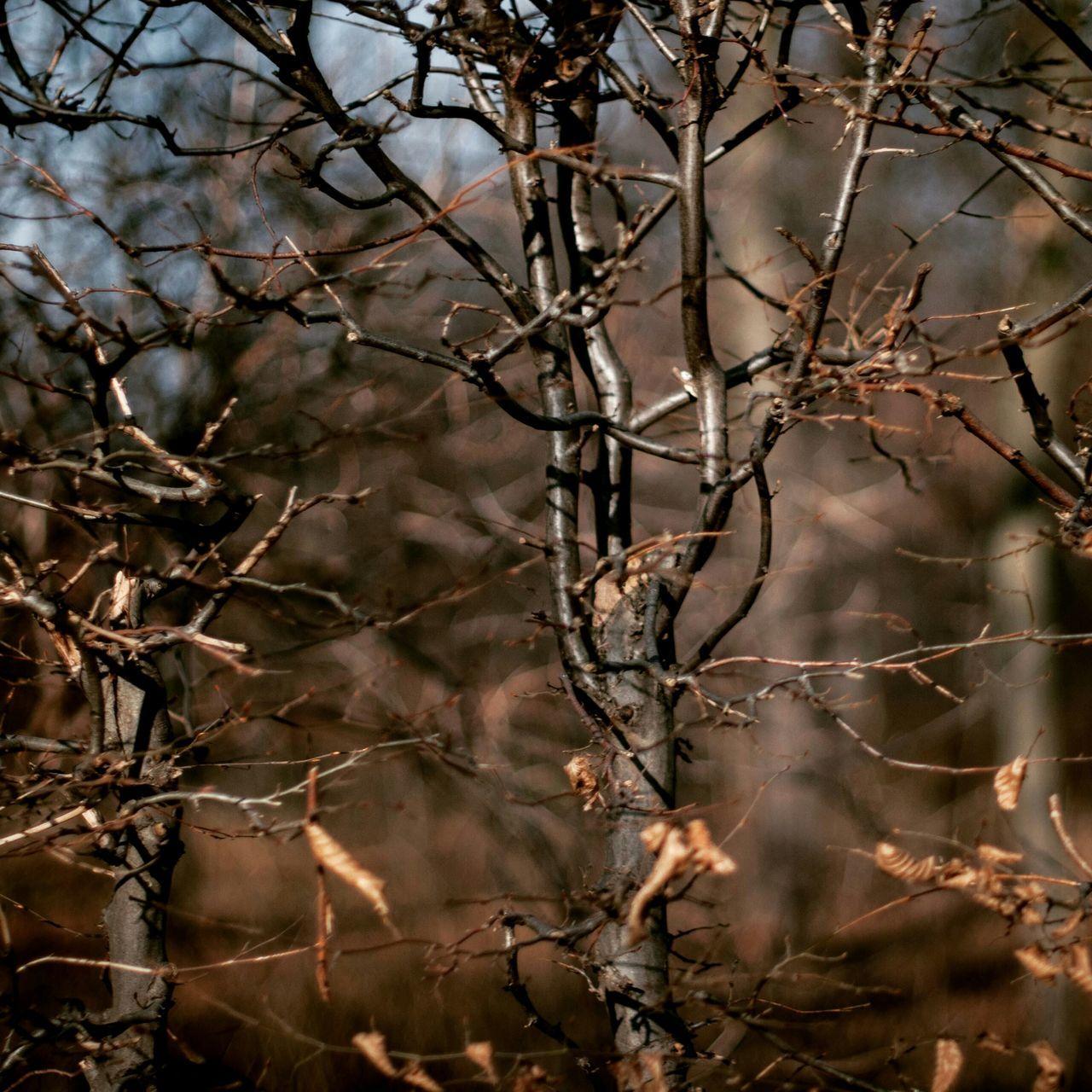 Close Up Of Bare Tree