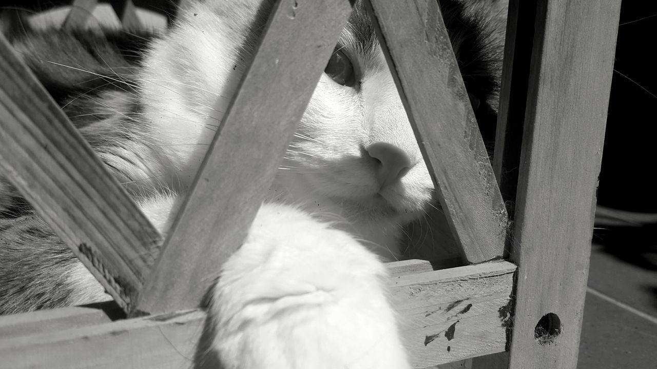 Close-Up Of Cat By Wooden Fence