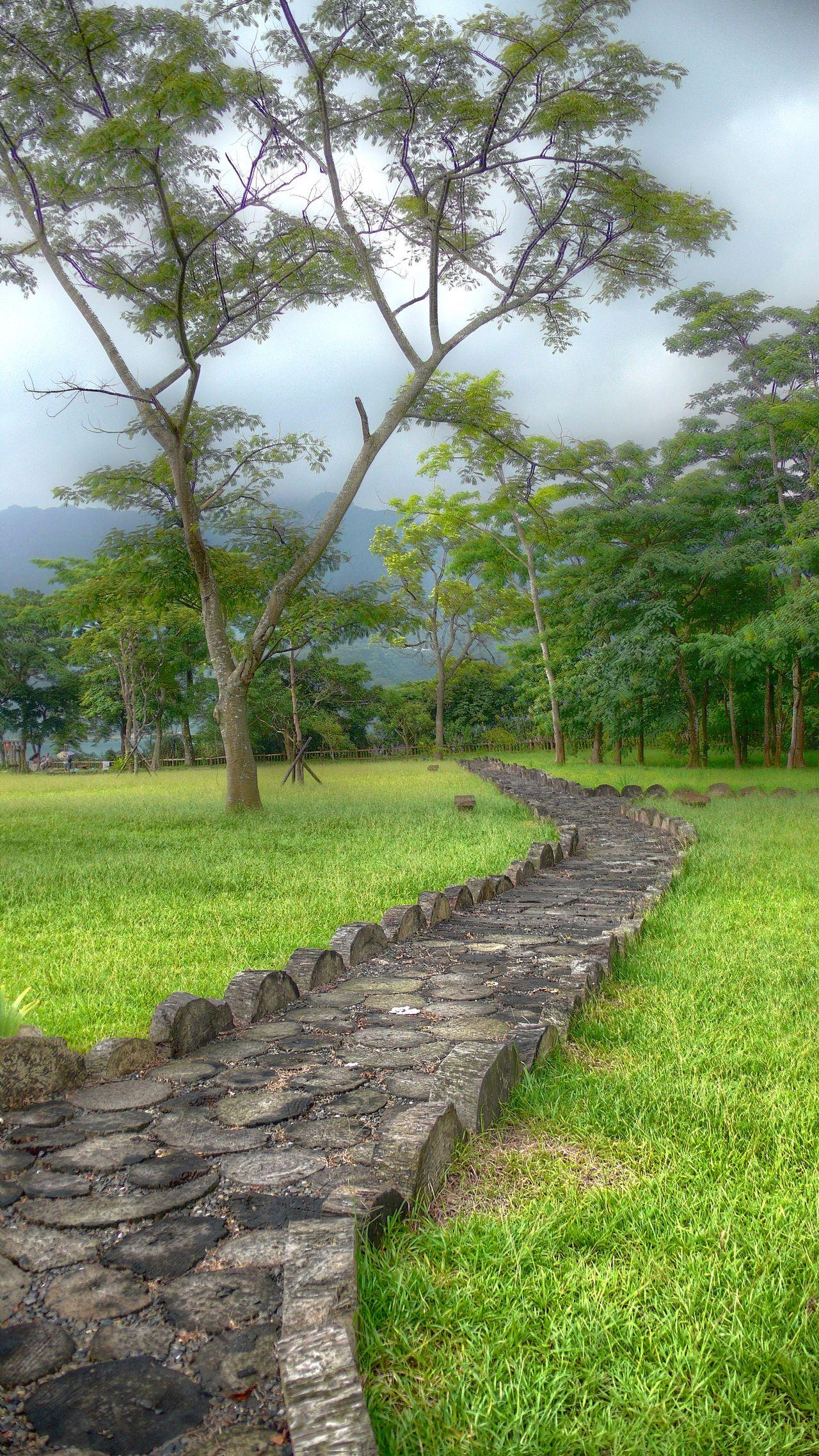 Flagstone Path Grass Grass And Trees Path Through The Trees Path, Grass, Tree Taiwan Wandering Path