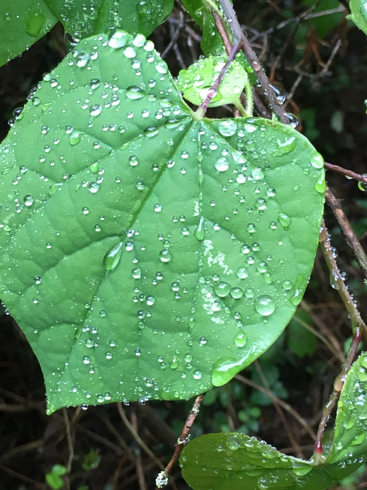 Close-up Drop Fragility Freshness Green Color Growth Leaf Nature Plant Rain Drops Rain Drops On Flowers Rain Drops On Leaves RainDrop Raindrops On Leaves Water Wet
