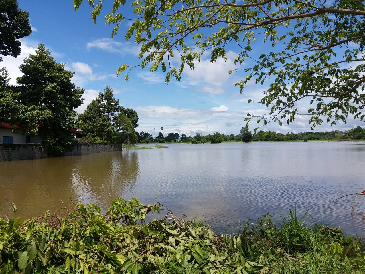 tree, nature, growth, water, sky, beauty in nature, scenics, lake, tranquil scene, day, plant, outdoors, cloud - sky, tranquility, no people, green color, leaf, branch