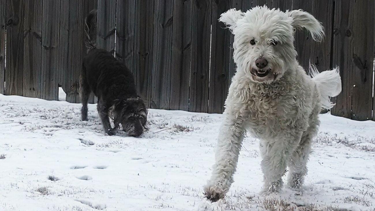 The girls enjoying the snow. Enjoying Life