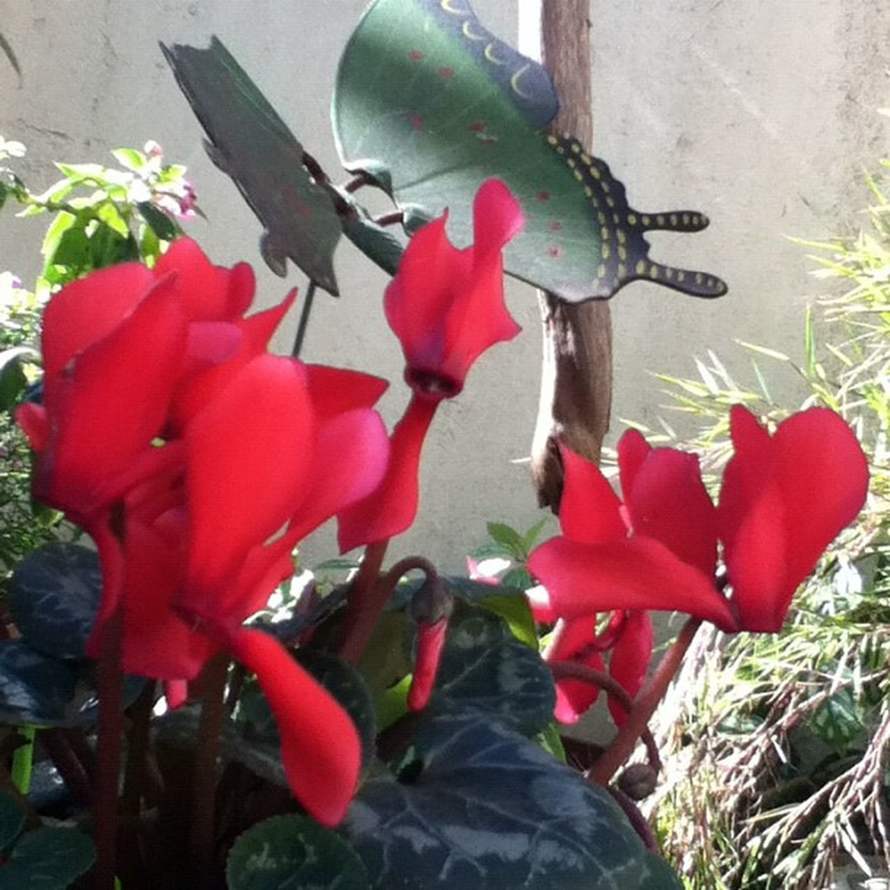 growth, red, plant, nature, flower, day, outdoors, close-up, beauty in nature, no people, fragility, freshness, flower head