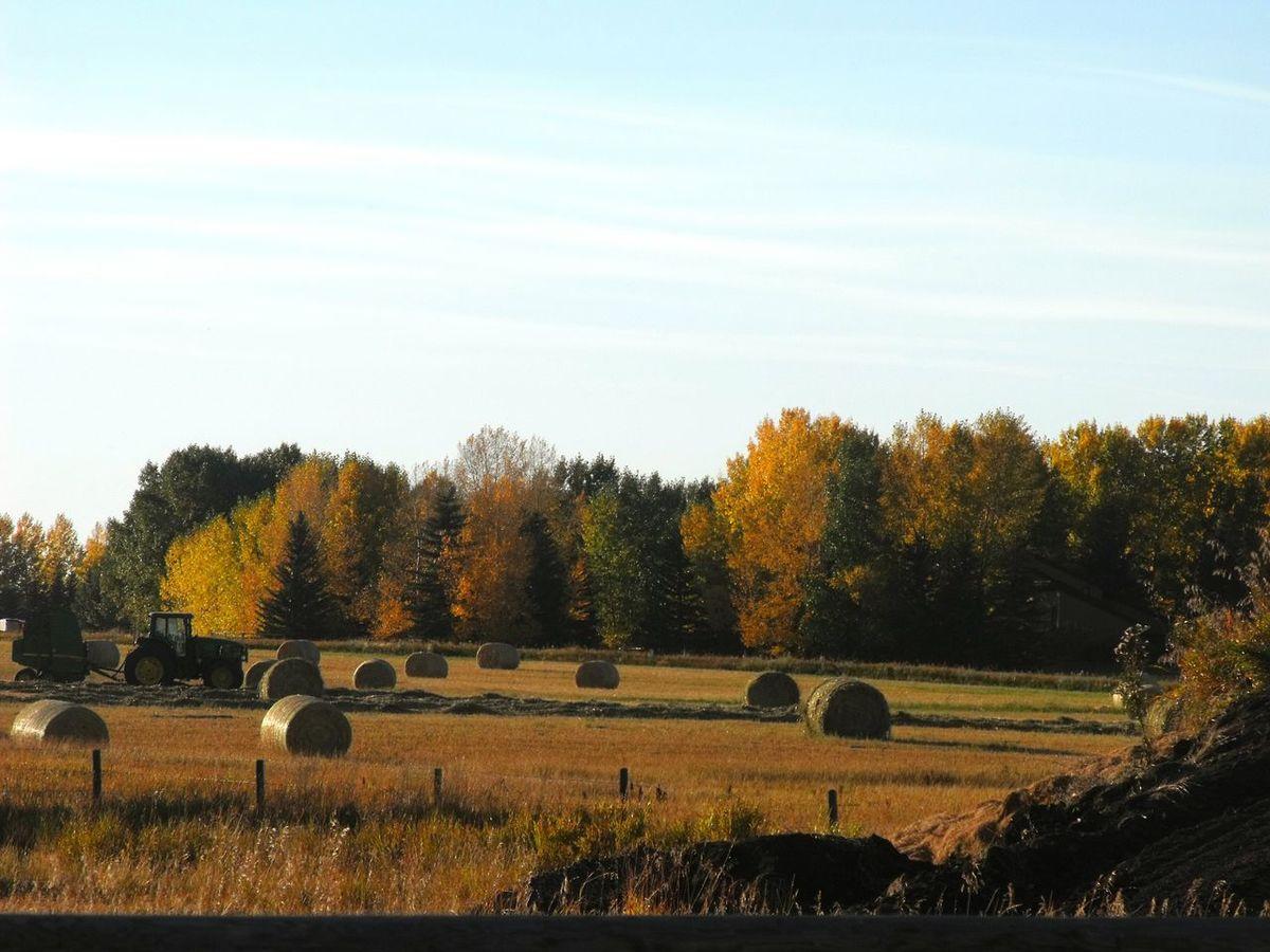 Prairie_collection Nature_collection EyeEm Nature Lover Landscape_Collection Alberta TreePorn EyeEm Sky Lover Prairies