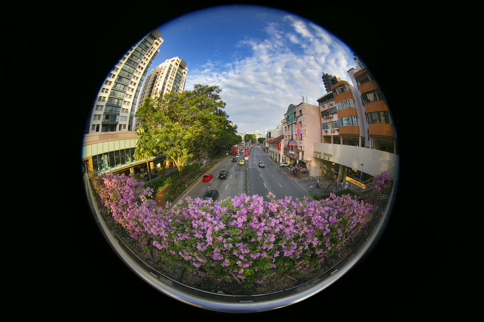 view from a pedestrian bridge, Singapore Building Exterior City Cityscape Fish-eye Lens Growth Highway Pedestrian Bridge Plant Singapore Traffic