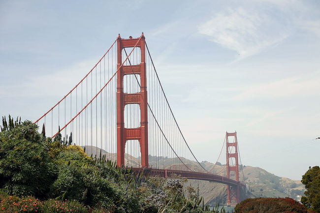 Architecture Blue Sky Bridge - Man Made Structure Built Structure Business Finance And Industry California City Connection Day Engineering Golden Gate Bridge Golden Gate Park Horizontal Low Angle View No People Outdoors San Francisco Sky Steel Cable Sunshine Suspension Bridge Tourism Travel Travel Destinations Tree