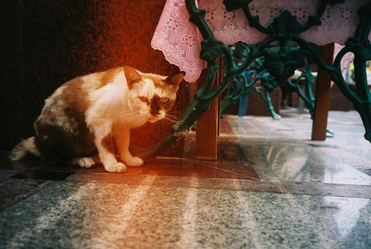 good morning Cat Chinatown Olympus_xa Lomography