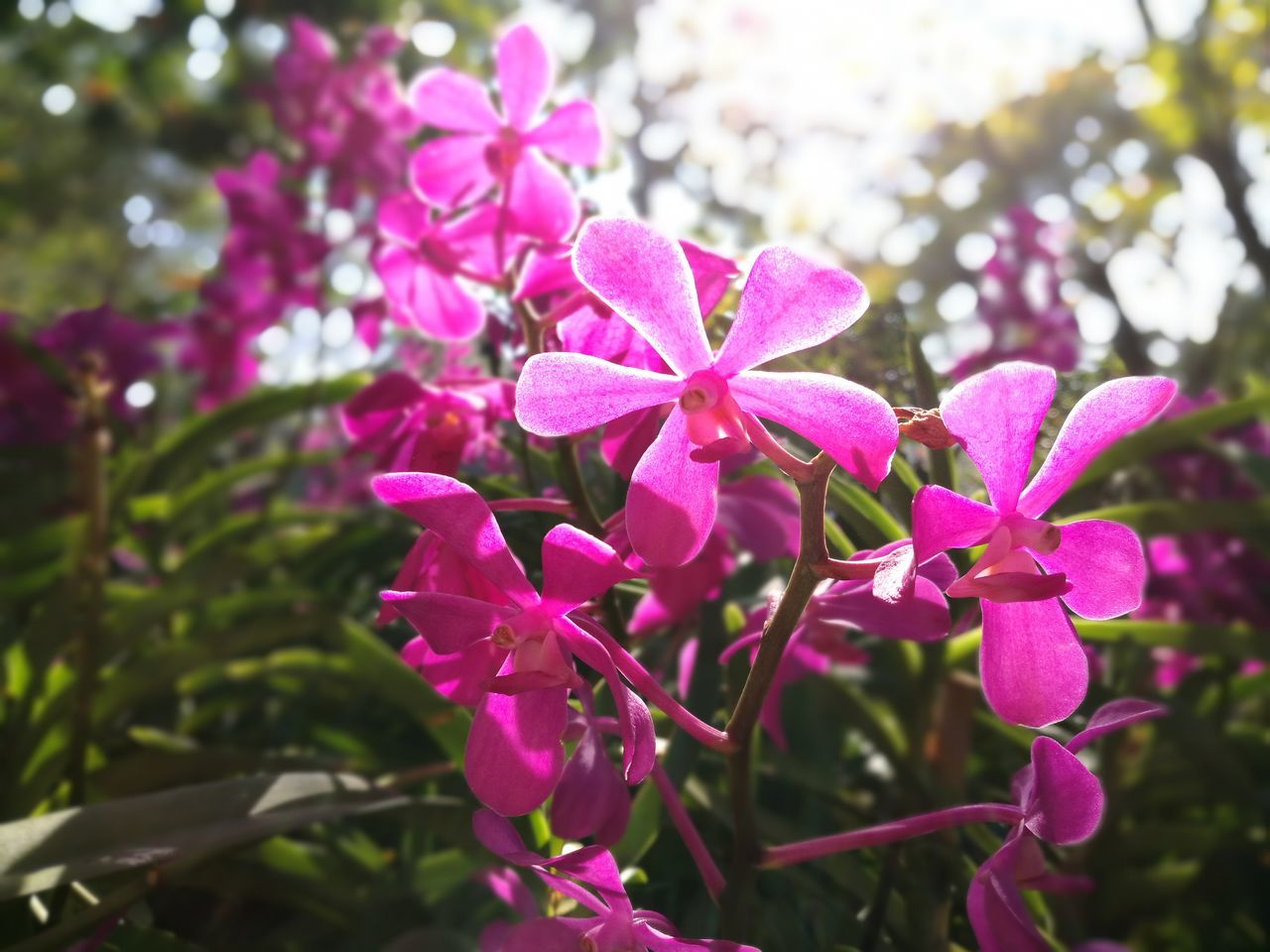 Purple exotic flower Thailand Light Morning Garden Exotic Flowers Exotic Day Outdoors Freshness Petal Plant Purple Pink Color Beauty In Nature Orchid Growth Nature Flower