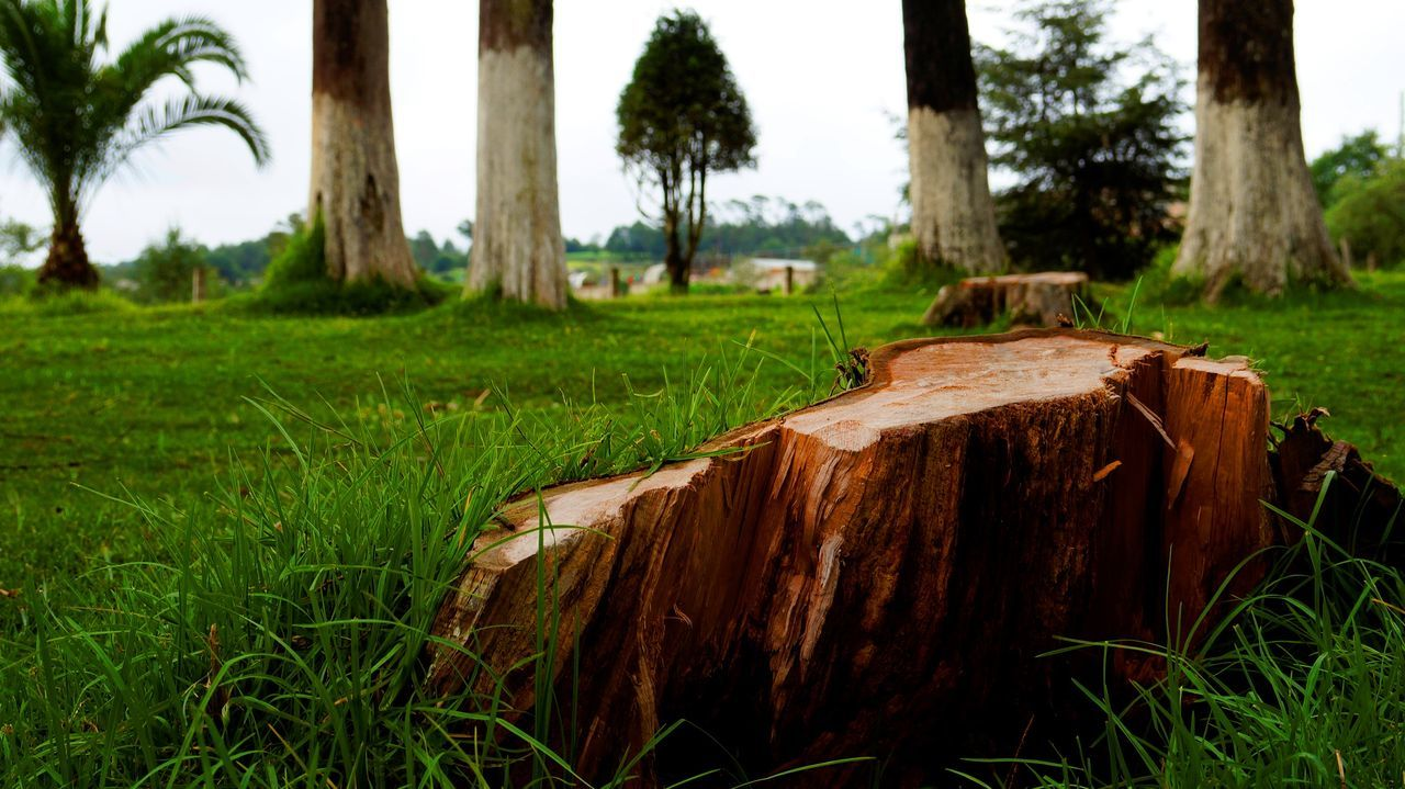 Close-up Day Died Tree Field Grass Green Color Growth Landscape Nature Nature Nature Photography No People Outdoors Photo Photography Tree Tree Trunk