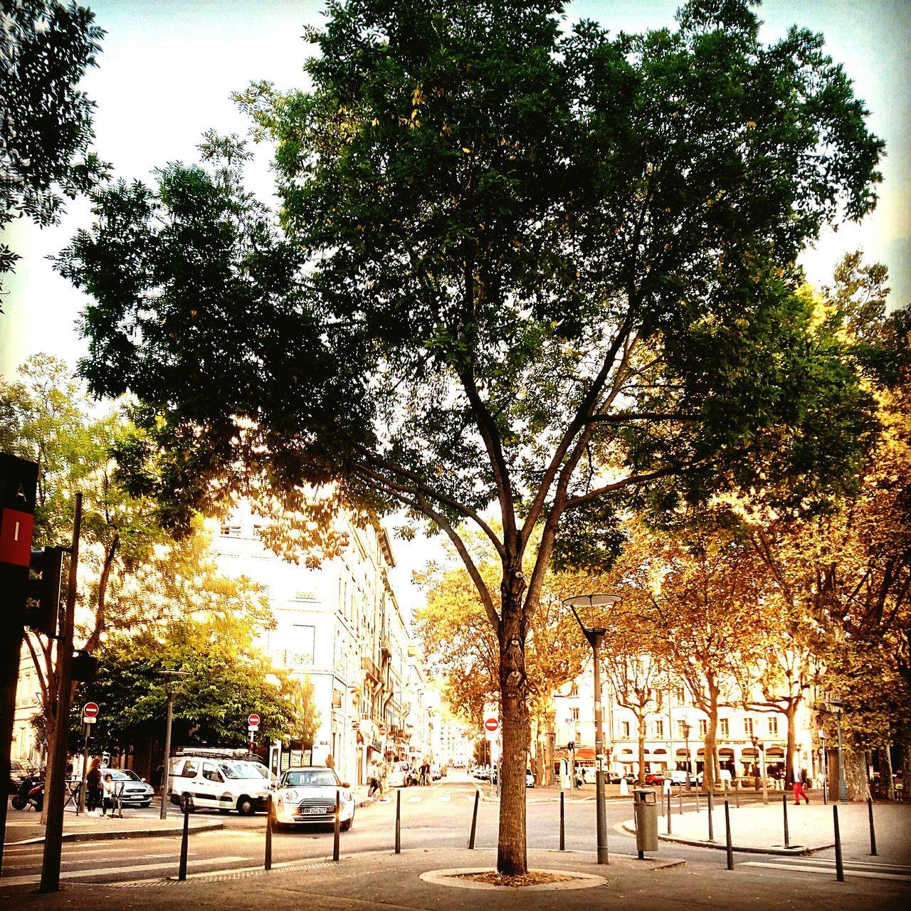 Placedeparislyon Lyon France Eteindien Indiansummer Tree Arbre Mouvement First Eyeem Photo