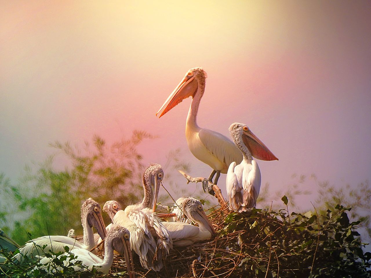 Pelicans On Nest Against Sky