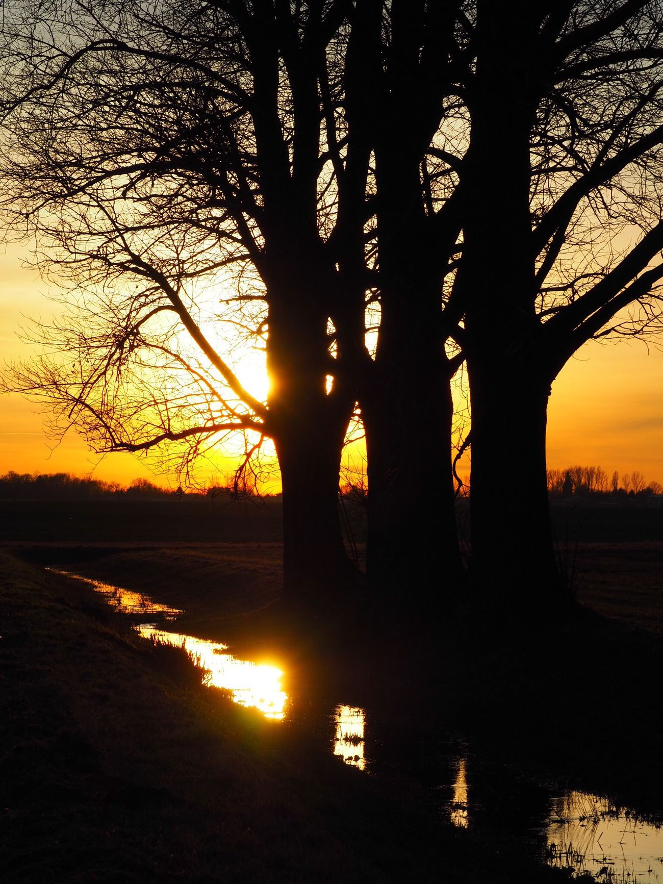 Sun_collection Sunset EyeEm Nature Lover Nature Capture The Moment Reflection Trees