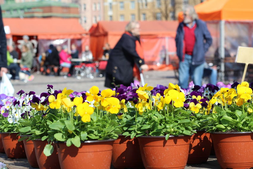Pictures taken at Hakaniemi Market Hall, no editing, no touching. Abundance April 2016 Choice FIN Finnish Spring Flower Flower Shop Focus On Foreground For Sale Fragility Freshness Hakaniemen Kauppahalli Hakaniemi Hakaniemi Market Hall Hakaniemi Tori Helsinki Market Market Stall Multi Colored The Street Photographer - 2016 EyeEm Awards The Great Outdoors - 2016 EyeEm Awards The Essence Of Summer Upclose Street Photography Spring Flowers The Shop Around The Corner