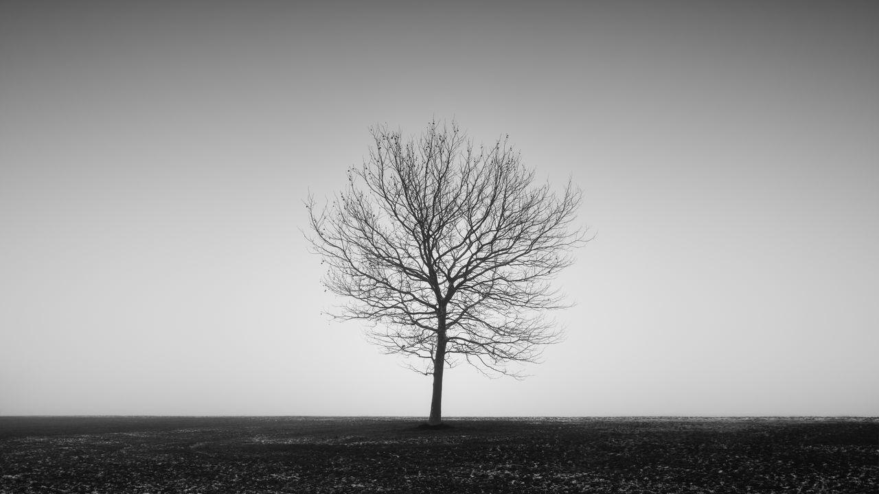 Bare Tree On Field Sky