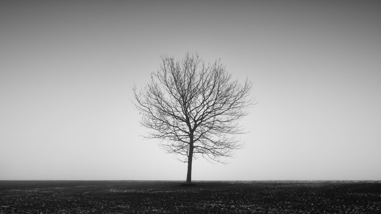single tree on the tempelhofer field in berlin, germany Bare Tree Beauty In Nature Berlin Black And White Branch Clear Sky Day Fine Art Fineart_photobw Isolated Landscape Lone Longexposure Nature No People Outdoors Philipp Dase Single Tree Solitary Solitude Tempelhofer Feld Tranquil Scene Tranquility Tree Winter