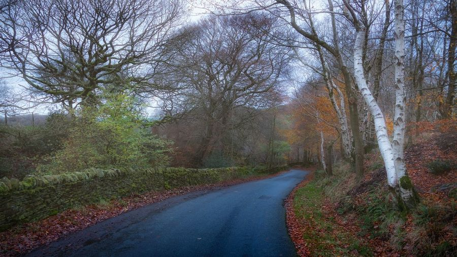 Lancashire lanes... Tree Nature Growth Road The Way Forward Landscape Outdoors Tranquility Rural Scene Beauty In Nature Streamzoofamily Taking Photos Landscape_photography Colourful Autumn Colors LumixG80 Landscape_Collection Autumn EyeEm Best Shots Malephotographerofthemonth Colours WoodLand Scenics Autumn Leaves