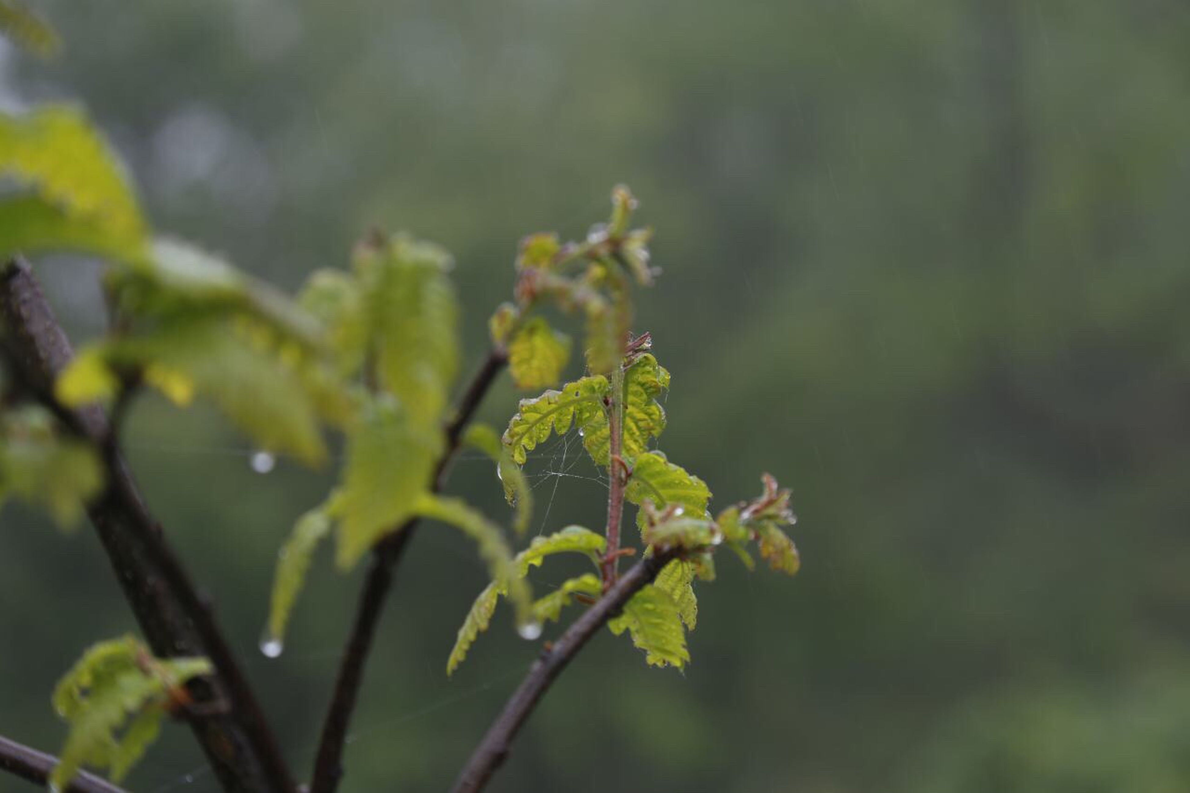 focus on foreground, growth, close-up, plant, nature, selective focus, leaf, green color, beauty in nature, stem, twig, outdoors, day, tranquility, no people, freshness, fragility, branch, growing, bud