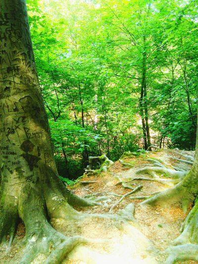 Trip Forest Nature Photography Path Road Trees Adventure Green Nature Fresh Air... Beatiful View Letsgo Sign Oldtree Naturelovers Naturephotography Mountain