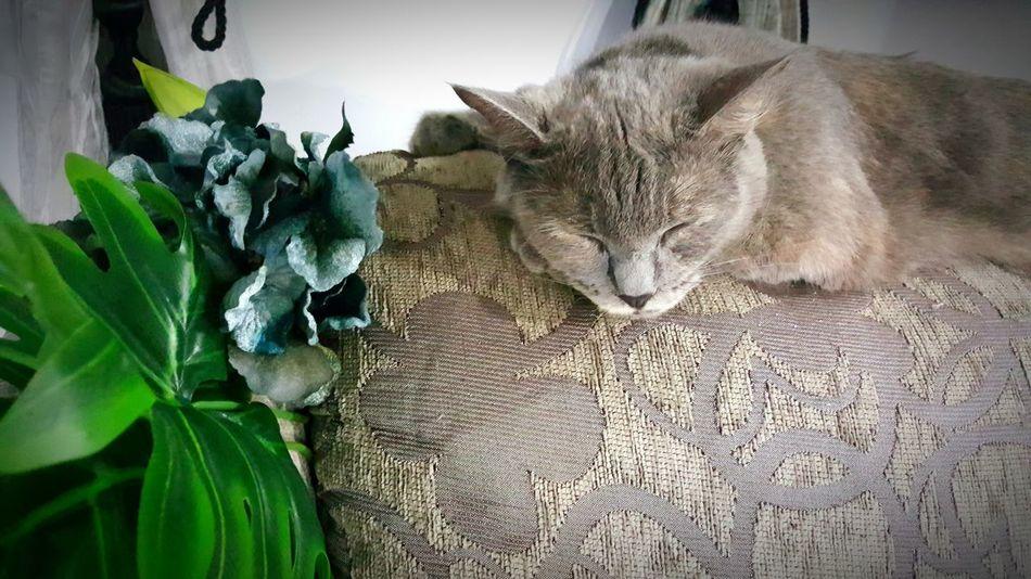 Cat Lovers Cat♡ Catofmylife Cat