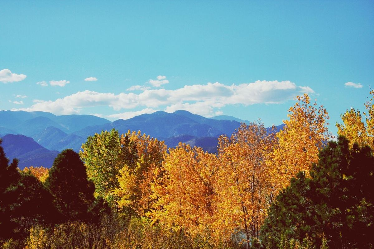 Mountains Fall Trees Landscape