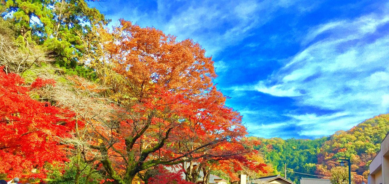 Takao Mountain Takao Mountains Mountain Aoutmn Fall Tokyo Tokyo,Japan Japan Japan Photography