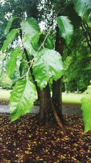 Jehovahscreation Leaves Rain Tree