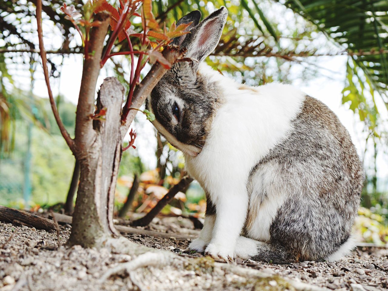 Nature Photography Nature Nature_collection Rabbit ❤️ Beauty In Nature Animal Rabbits Rabbits 🐇 Pretty Animal Wildlife Animal_collection Animal Themes Rabbit Animals Animal Photography Animals In The Wild