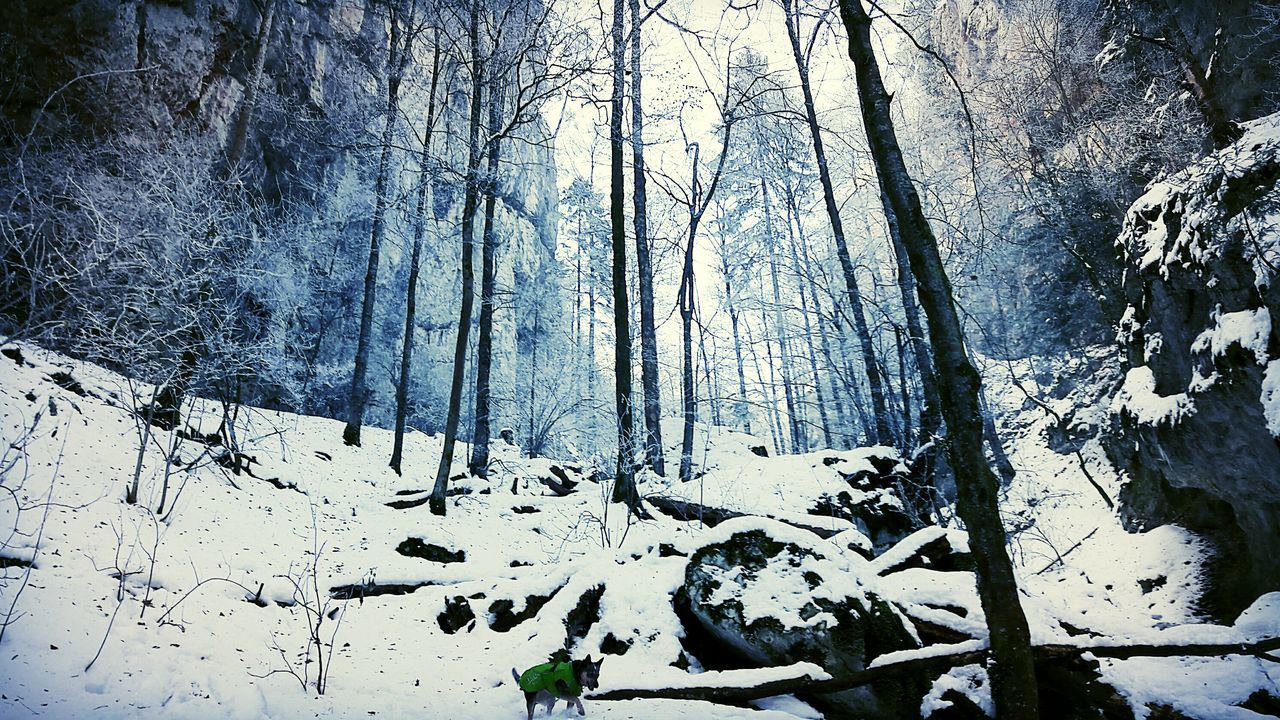 mystical snowy forest 😍🌲❄🐾 Winter Wonderland Winter Wonderland Snow ❄ Snowy Frosty Icy Nature Mystical Forest :) Forest Trees White Woodlands Bluefilter Spirits Outdoors Silenceofnature