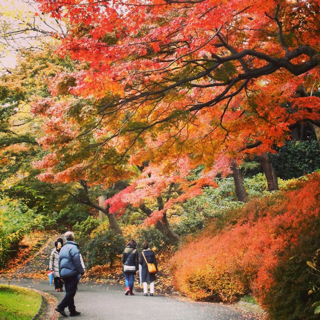 皇居東御苑の紅葉。 Tokyo Days Japan People