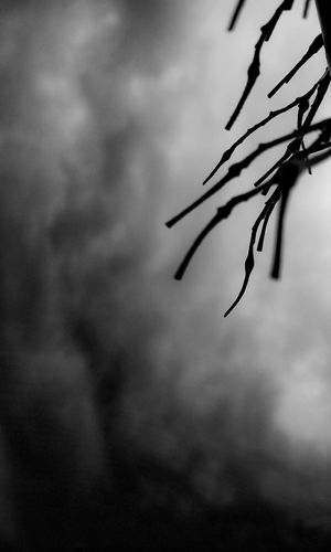 Dramatic Sky Dry Branch Sky And Branches Fine Art Photography