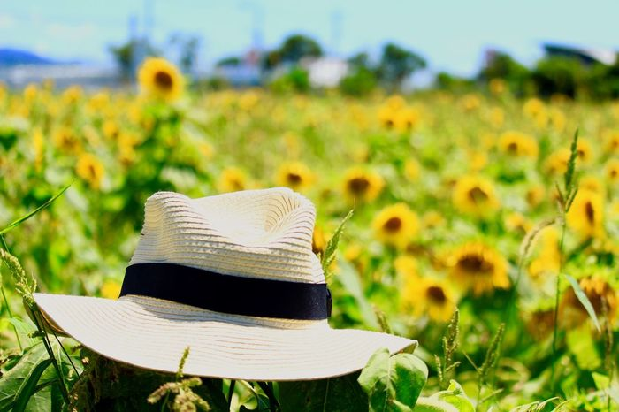 Straw Hat Close Up Straw Hat Farm Sunflower Yellow Day No People Outdoors Flower Nature Sky Close-up 花 ひまわり ひまわり畑 麦わら帽子 日本 天草 Japan Amakusa EyeEm Selects EyeEm Nature Lover Canonphotography Canon Landscape