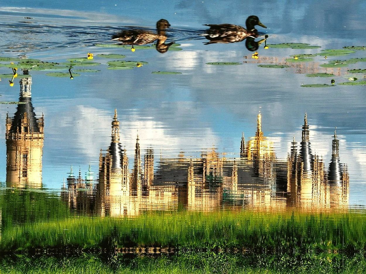 Beauty In Nature Reflection Reflections In The Water Mirror Effect Water Nature Ducks Swimming Castle Schwerin castle garden