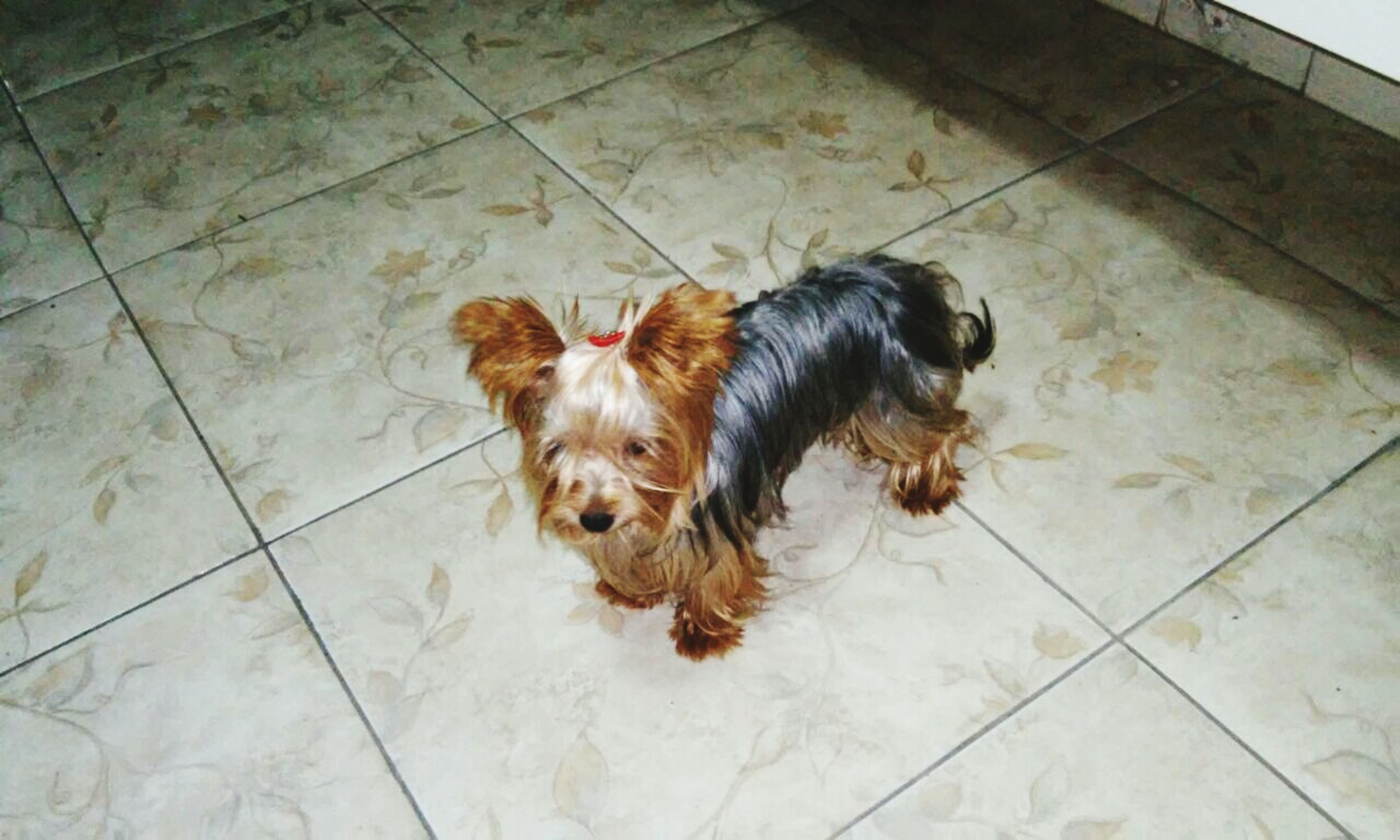 domestic animals, animal themes, pets, mammal, one animal, dog, high angle view, tiled floor, flooring, full length, relaxation, indoors, animal hair, sitting, no people, floor, lying down, paving stone, zoology, black color