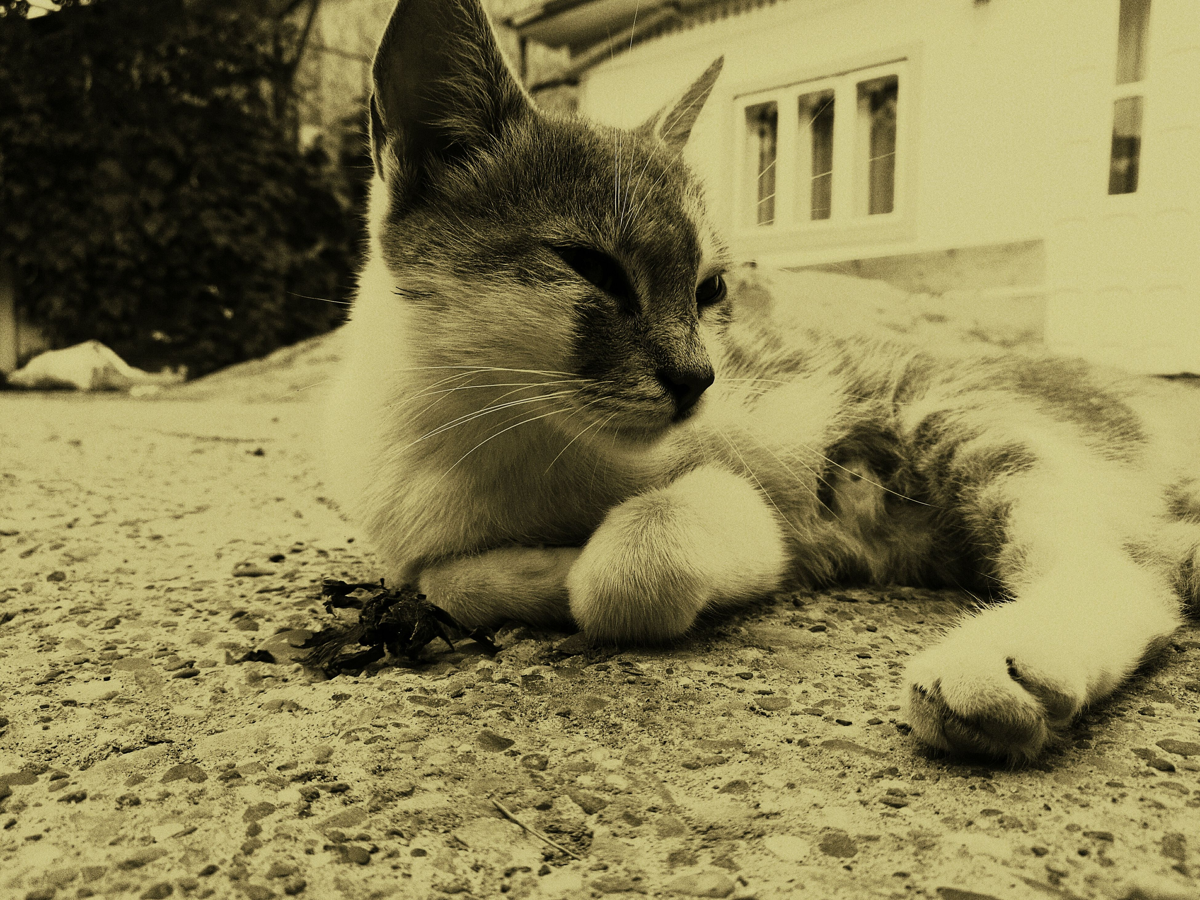 one animal, animal themes, domestic animals, pets, cat, domestic cat, mammal, relaxation, feline, outdoors, day, curiosity, no people, zoology