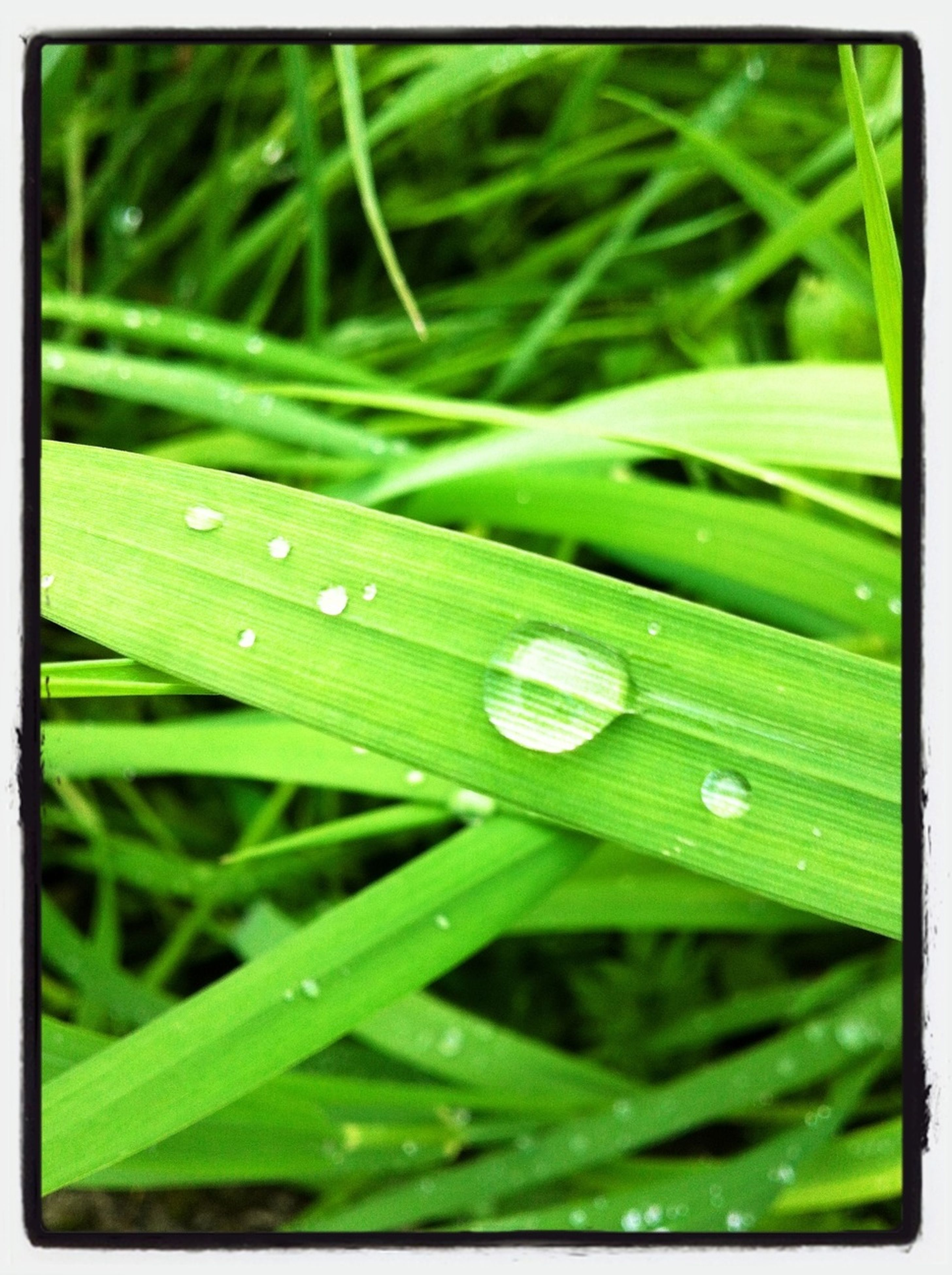 transfer print, green color, drop, growth, close-up, leaf, water, grass, wet, freshness, auto post production filter, nature, fragility, dew, focus on foreground, beauty in nature, selective focus, plant, green, raindrop
